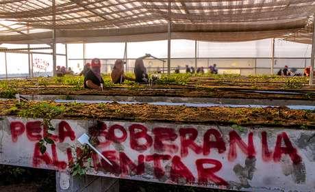 Militantes na área de pesquisa daSuzano Celulose Foto: MST / Divulgação