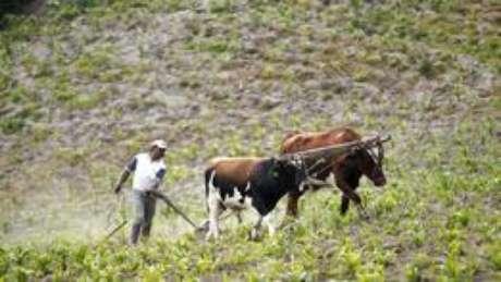 Laticínios, grãos e carnes têm uma forte presença nos EUA, Austrália, Nova Zelândia, Argentina, Brasil e Europa Foto: Think / Reuters