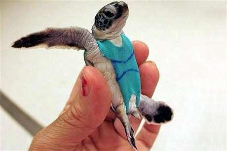 Los trajes fueron desarrollados para recolectar heces fecales de los reptiles.