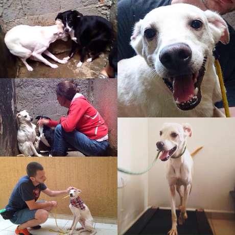 Cão resgatado em Santo André