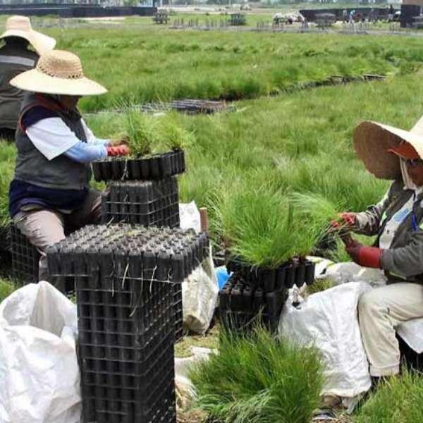 Vivero de xochimilco crece en calidad for Viveros en toluca