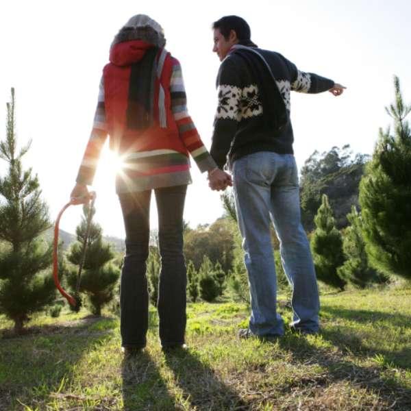 D nde comprar rboles de navidad naturales aqu una lista for Lista de arboles perennes