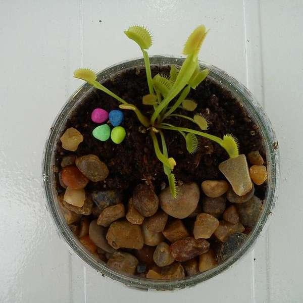 Plantas en el hogar aprende a hacer un terrario for Plantas en el hogar