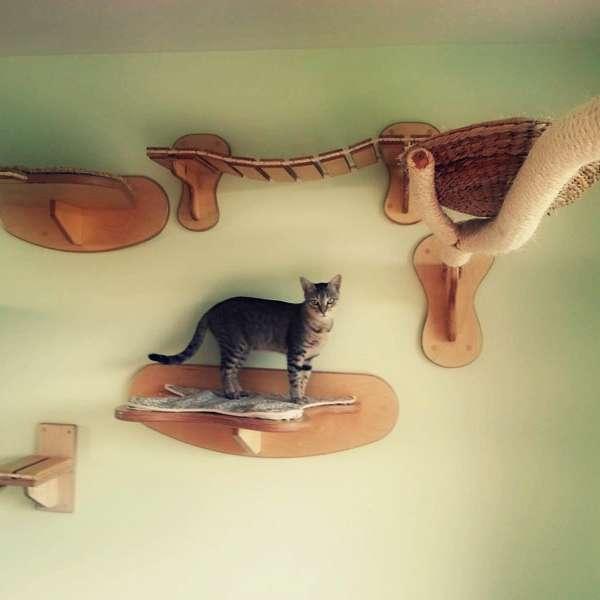 Gatos un parque de diversiones para felinos en tu hogar for Gato de carpintero