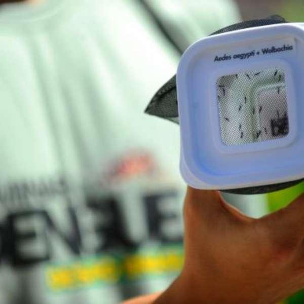 MS: prefeitura de Três Lagoas investiga morte por dengue - Terra Brasil