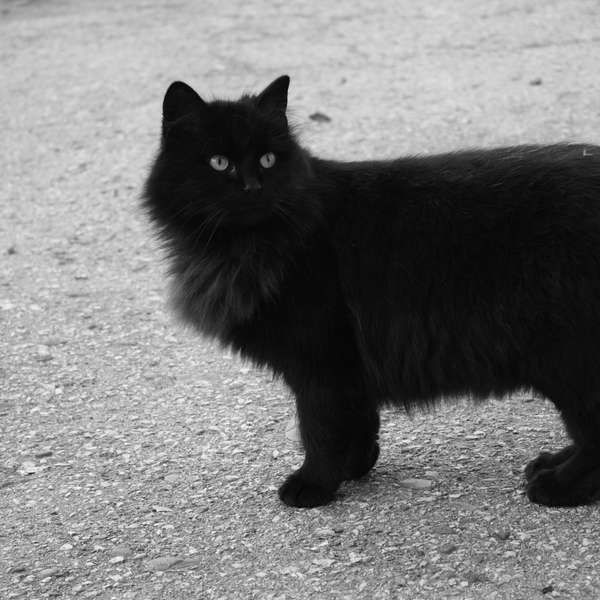 Viernes 13 c mo surgi la superstici n con los gatos negros - Los peces traen mala suerte ...