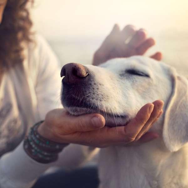 La mujer que entrena a perros para follar con humanos