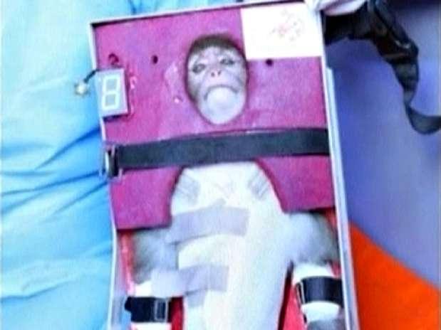 Imagem de TV estatal mostra macaco que teria sido lançado ao espaço pelo Irã Foto: AP