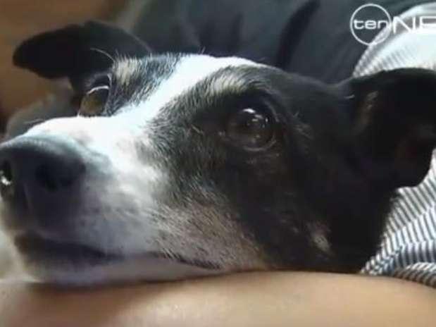 Según el veterinario, lo que lo salvó a Salty fue la reanimación cardiopulmonar Foto: Channel Ten  / Reproducción