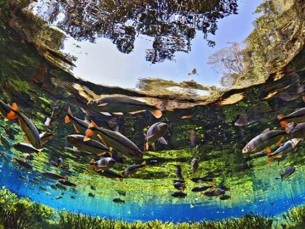 Bonito é conhecido pelos águas cristalinas e natureza preservada Foto: Divulgação