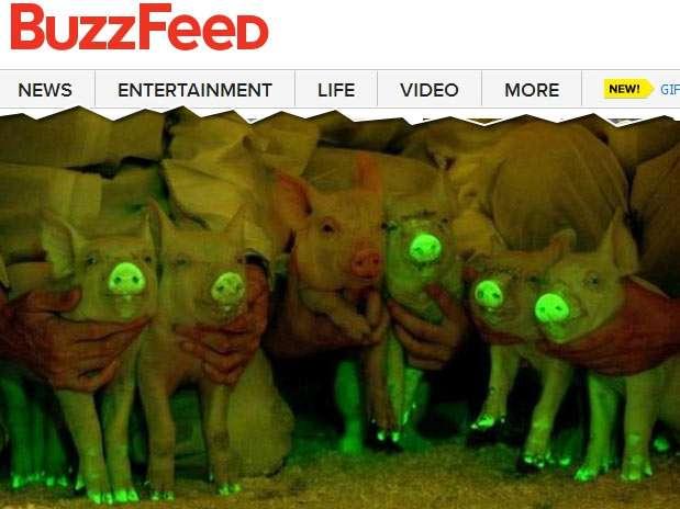 Animais foram modificados geneticamente quando eram embriões Foto: Buzzfeed / Reprodução