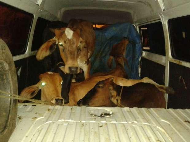 Os cinco animais eram transportados dentro de uma Kombi Foto: PRF/MG / Divulgação