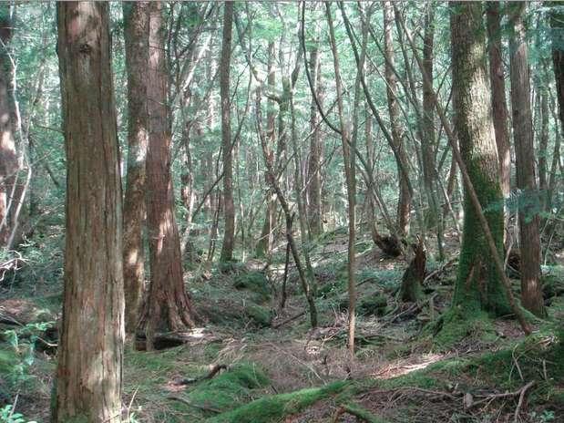 http://p2.trrsf.com/image/fget/cf/67/51/images.terra.com/2012/10/15/1-aokigahara.jpg