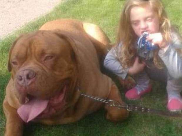 De acordo com vizinhos, o tamanho do cão não intimidava Lexi Foto: Reprodução