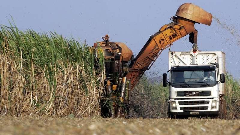 Como empresas produtoras de açúcar e ambientalistas se uniram contra plantio de cana em áreas da Amazônia