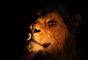 Este león fue fotografiado por Michaela May durante un safari en Sudáfrica.