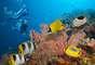 Barrera de coral. Es el mayor sistema marino del planeta, con islas coralinas, bellas playas y muchos lugares para disfrutar de la naturaleza. Sin embargo, hoy enfrenta la amenaza del rápido desarrollo de la costa de Australia, donde están siendo construidas plantas de gas natural y por el calentamiento de las aguas, que ya acabaron con el 50% de los corales en menos de tres décadas.