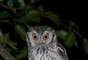 World Birding Rally: extranjeros observan aves en el Perú