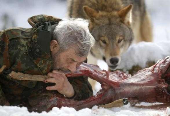 El investigador Werner Freund convive las 24 horas de sus días con una manada de lobos en el recinto en Wolfspark Werner Freund, en Merzig, en la provincia alemana de Saarland. El hombre ha reunido durante 40 años a unos 70 animales en su reserva que se extiende por al menos 25 hectáreas.