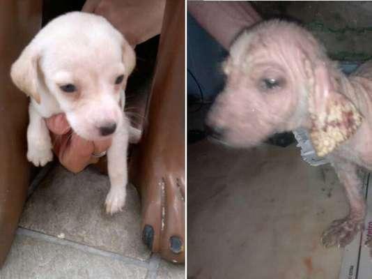 A cadela Branquinha antes e depois da hospedagem na Anjos de Quatro Patas