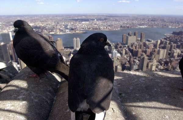 New York, la ciudad que representa el orgullo y la cultura estadounidense y que se ha convertido en el imán de dicho país para atraer a miles de personas a lo largo del mundo. El 2 de febrero, será pr vez primera sede del Super Bowl