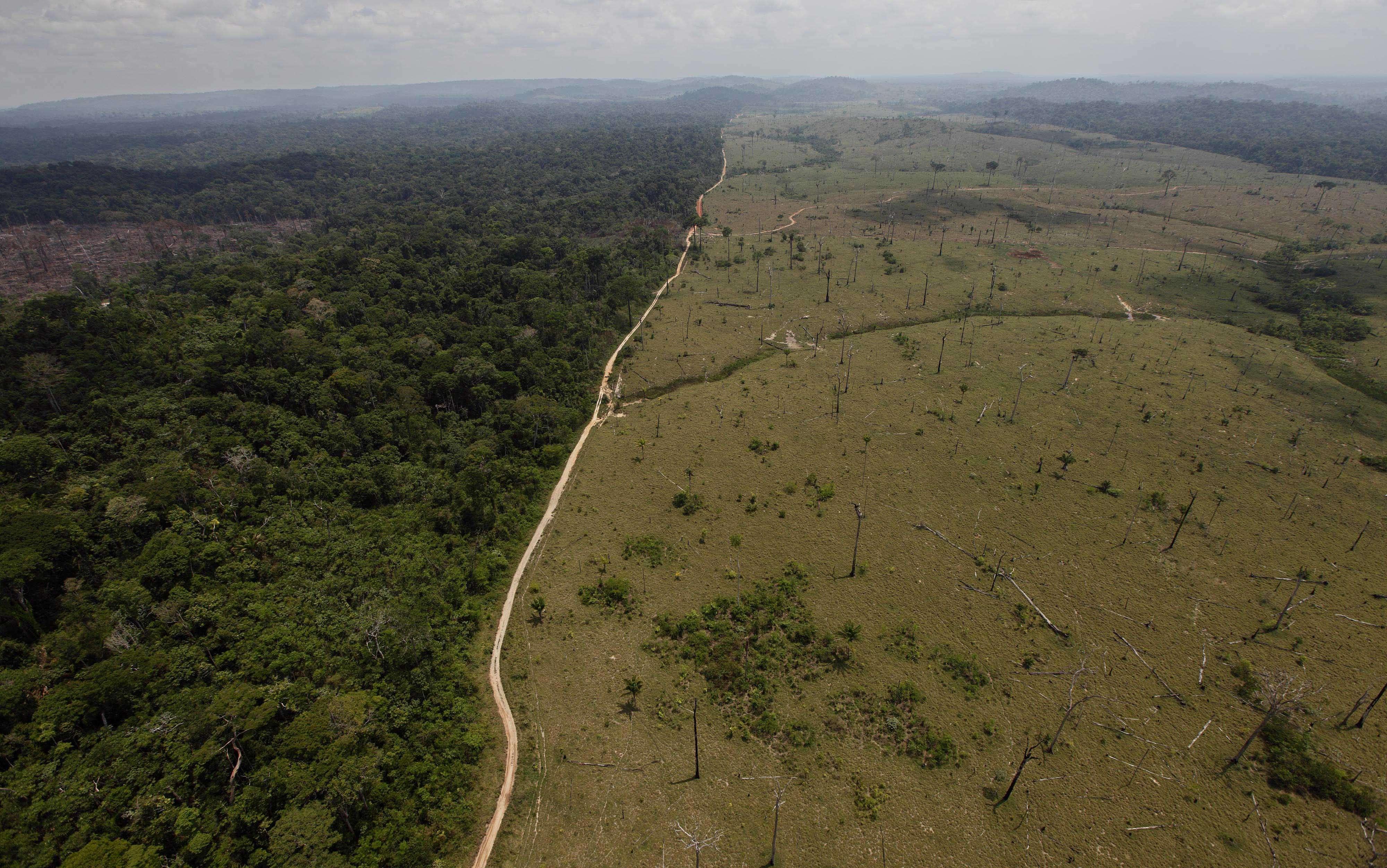 Selva amazónica en peligro Foto: Difusión