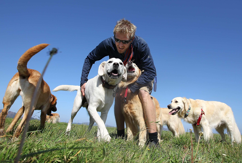 Por que os cães gostam de cheirar traseiros de outros cães?