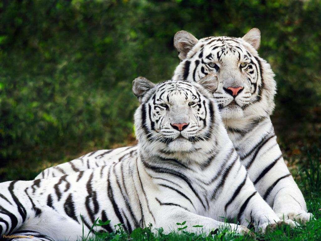 Este 29 de abril se celebra el Día del Animal. Repasá los mejores exponentes coon impactantes imágenes Foto: Web