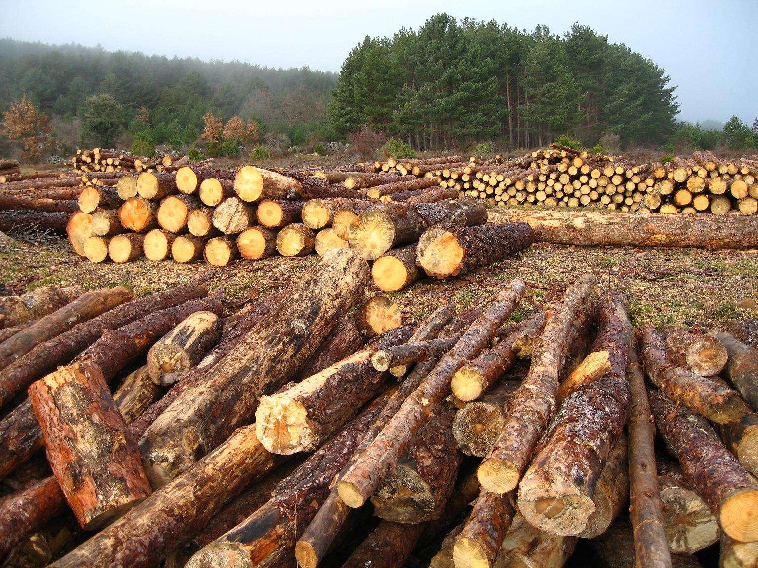 Tala de árboles. Foto: BBC