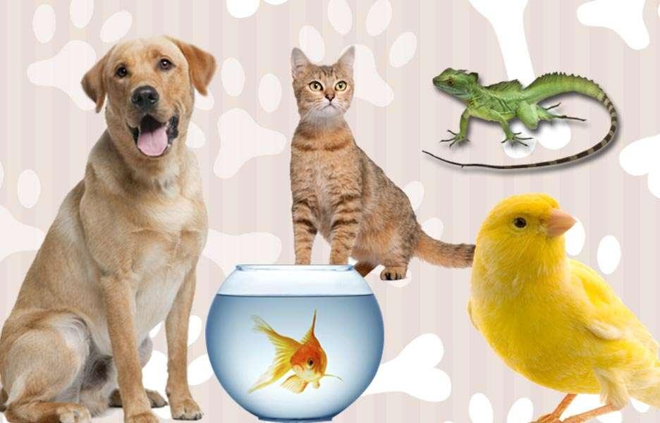 Faça o teste e descubra qual o animal de estimação ideal