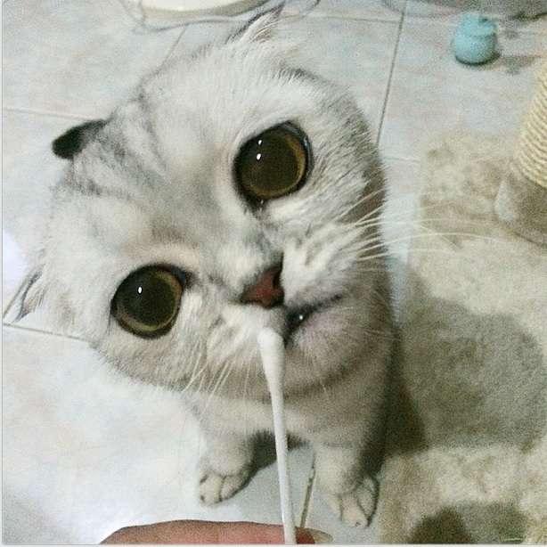 "Conheça Little P, a gata ""depressiva"" hit do Instagram"