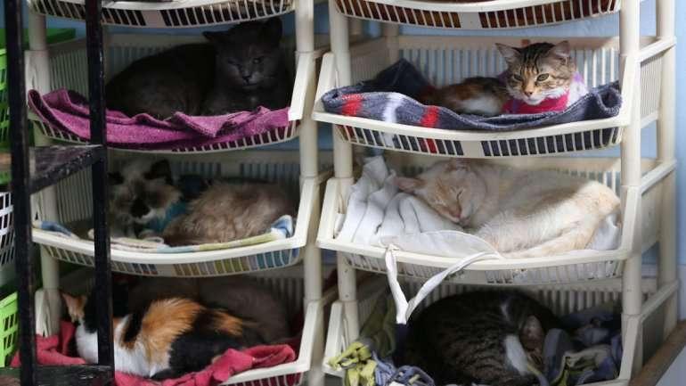 Mujer tiene hospital y cuida 175 gatos con leucemia en Perú