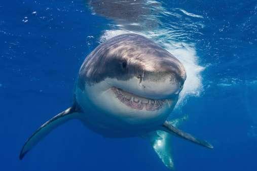 ¡Tiburones! Google deberá recubrir sus cables submarinos
