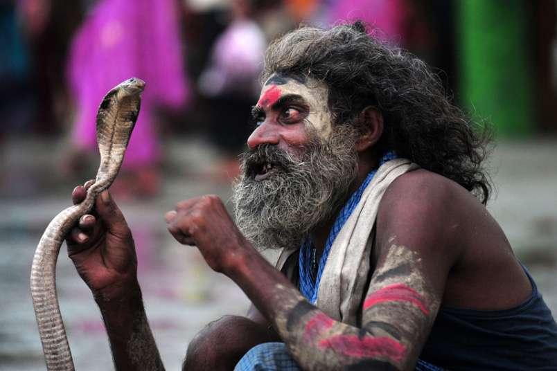 Un encantador de serpientes de la India se encarga de una de ellasa la espera de limosnas de los devotos hindúes durante el festival Teej en el Sangam, en Allahabad.