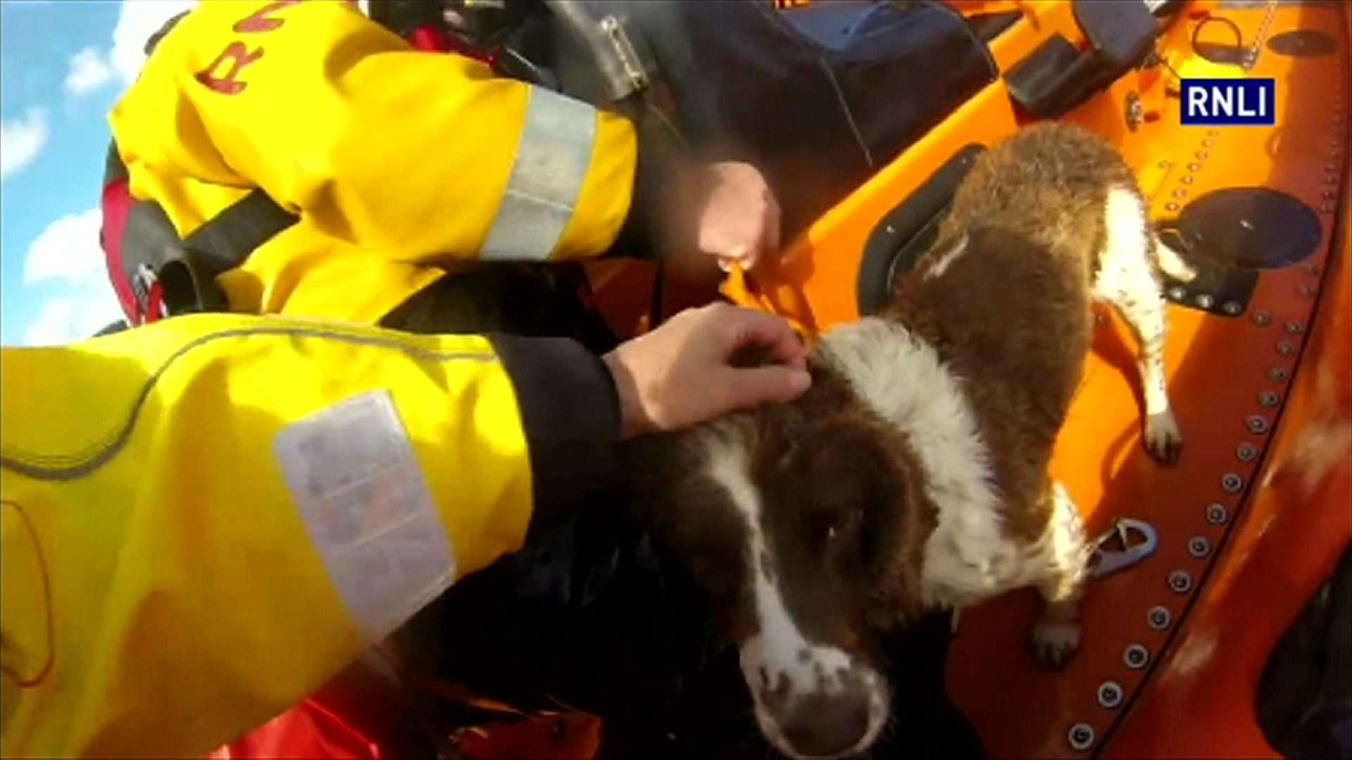Cão é resgatado após passar quase dez dias isolado em rochas
