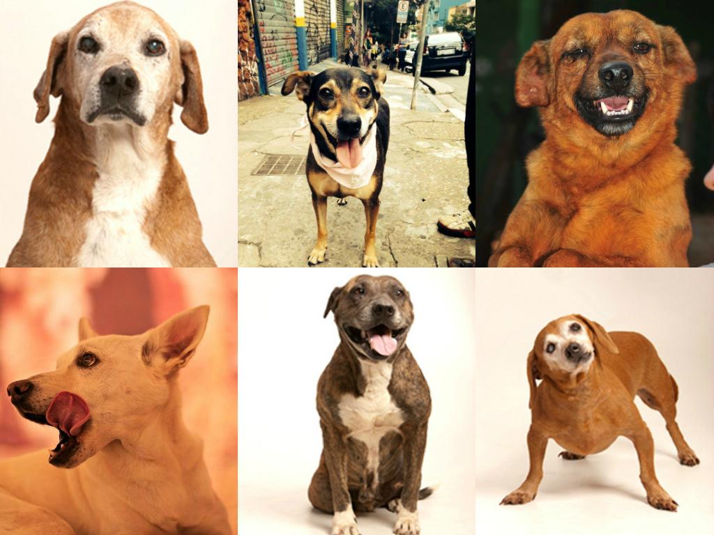 ONGs resgatam cachorros abandonados Foto: Reprodução