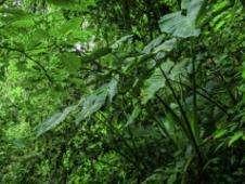Selva amazónica Foto: BBC Mundo/Copyright