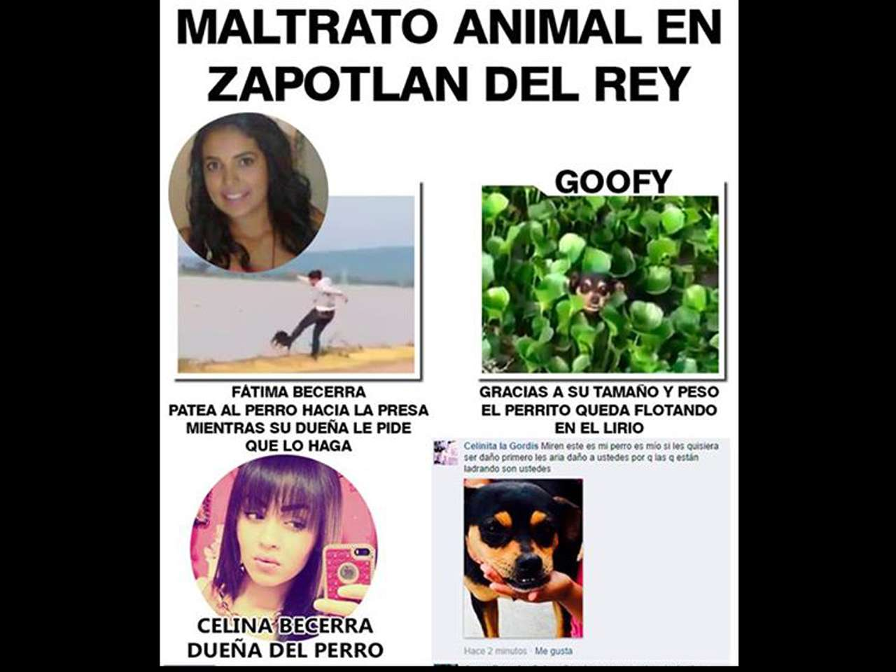 Esta situación ya fue denunciada ante el Ministerio Público Foto: Facebook/Paraíso Canino Poncitlán
