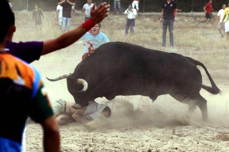 "El toro ""Elegido"" engancha a un participante en el Torneo del Toro de la Vega. Foto: EFE"