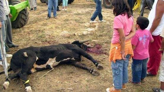 Imagen de la página de Facebook Abolición becerradas de Algemesí!!!!Ya Foto: Abolición becerradas de Algemesí!!!!Ya