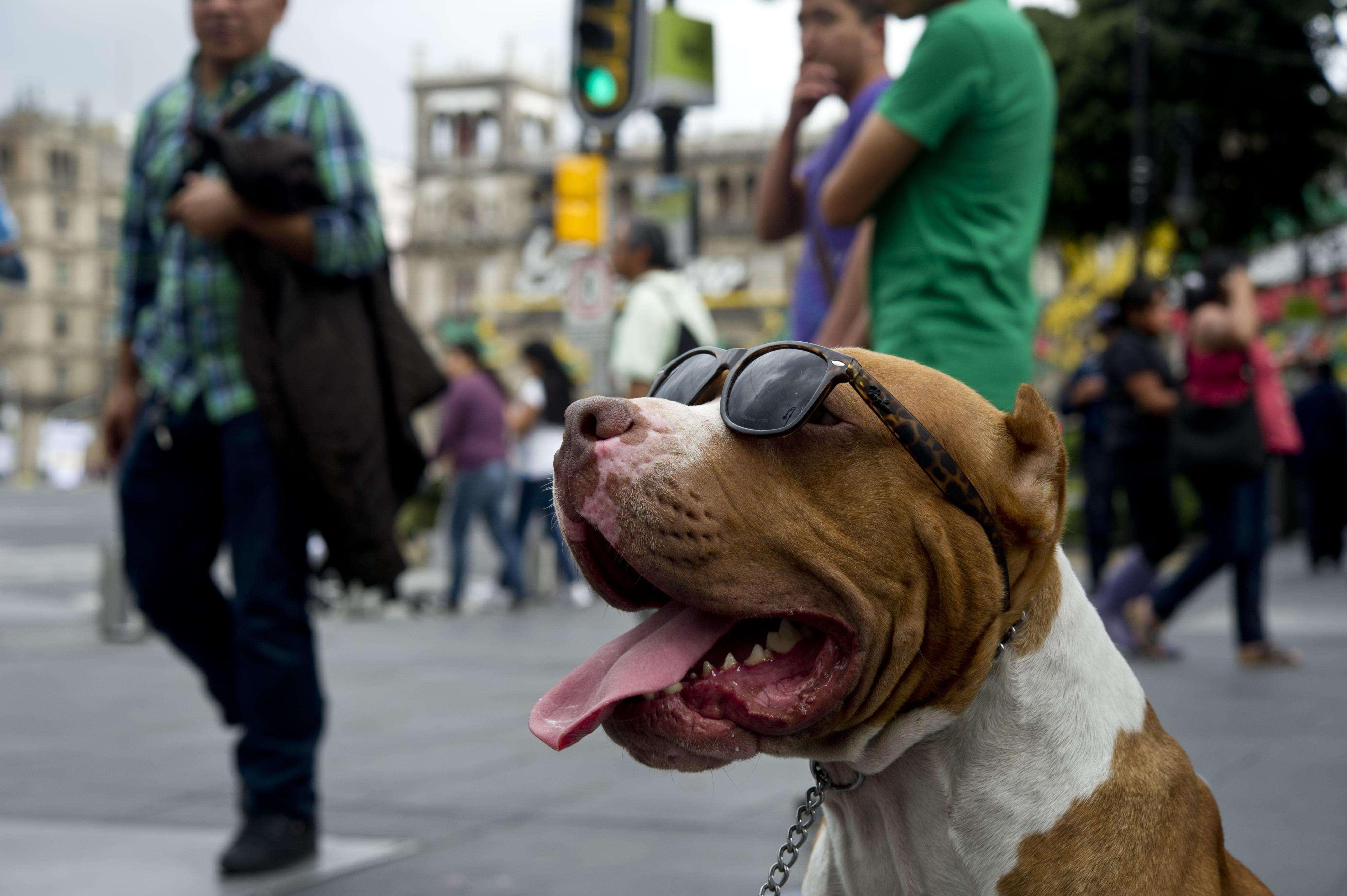 Fotos 22 septiembre. Foto: AFP