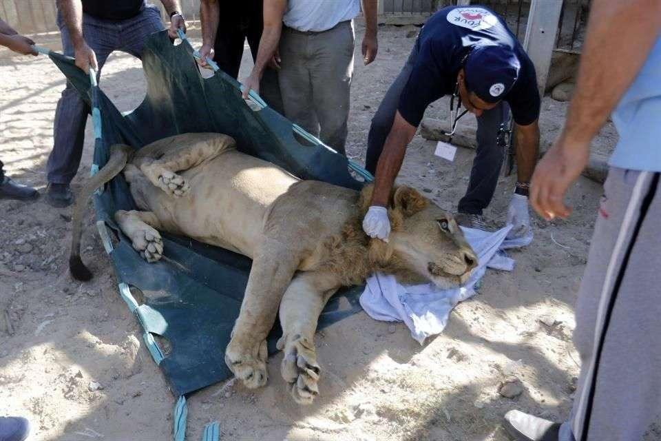 El zoológico en Beit Lahia en la franja de Gaza, resultó dañado en la reciente guerra entre el Ejército israelí y la organización Hamas Foto: AFP en español