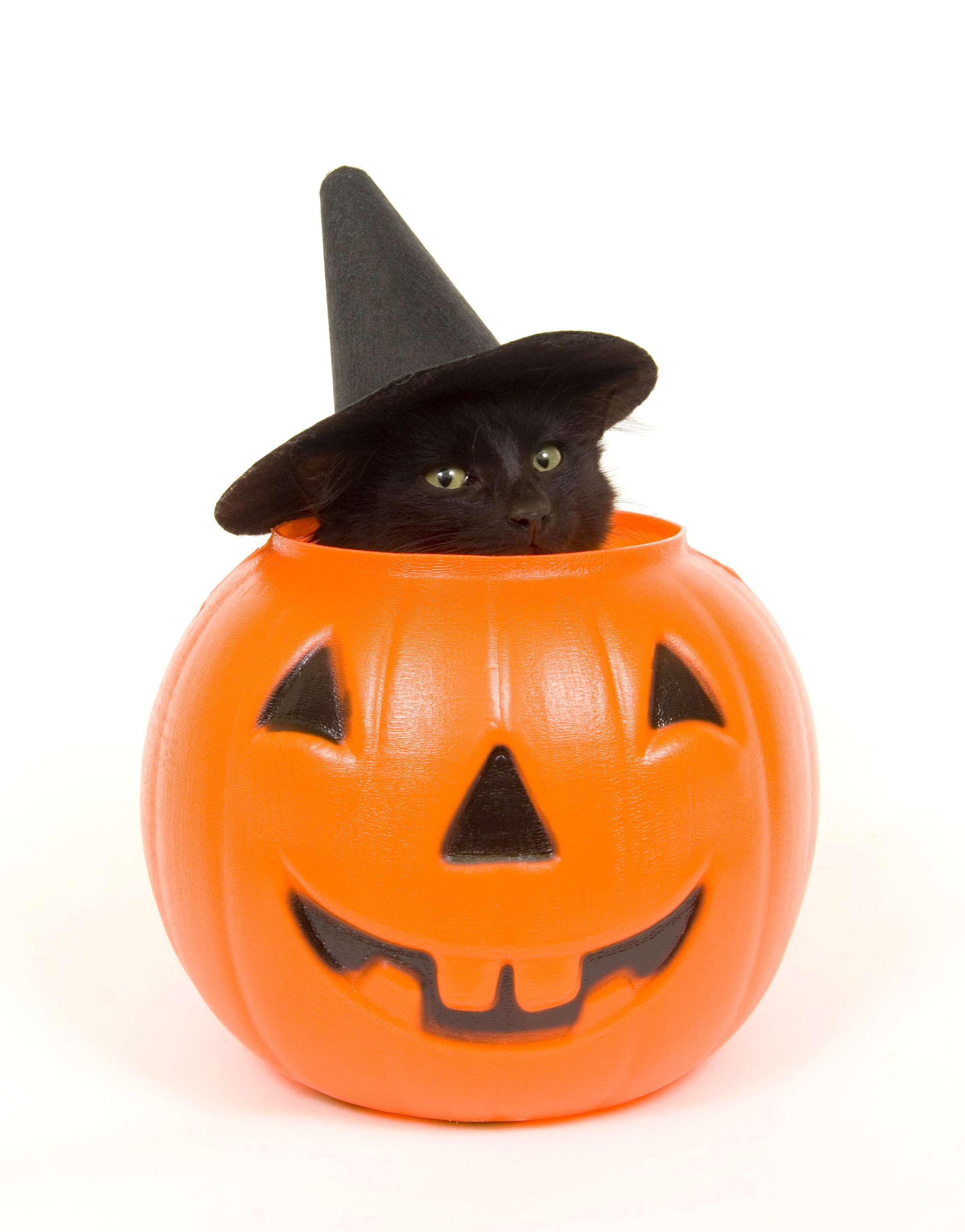 La maldición de los gatos negros Foto: iStock