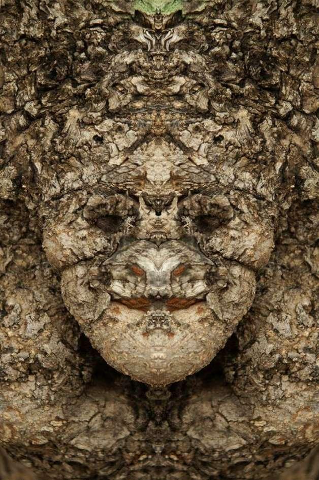 Fotógrafo cria série com rostos escondidos em árvores. Foto: Reprodução