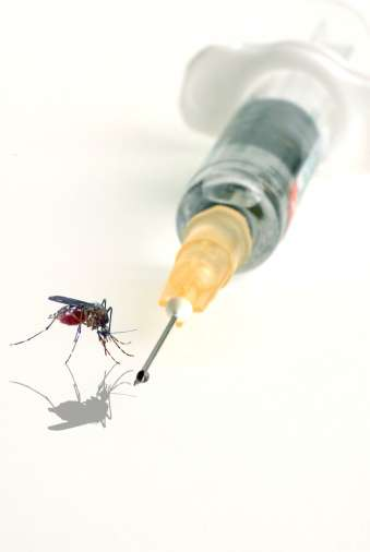 Chikungunya. Foto: Getty Images