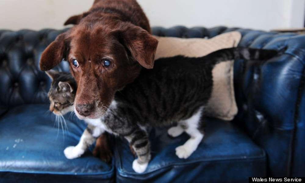 A história do gato que virou guia de um cão cego e que prova o poder da amizade entre os animais. Foto: Reprodução