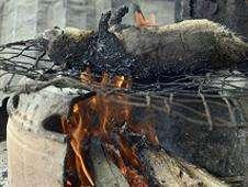 Puercoespín en la parrilla Foto: BBC Mundo/Copyright