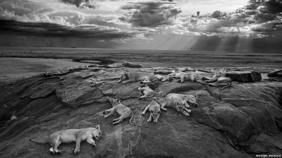 Foto: Michael Nichols/Wildlife Photographer of the Year 2014/Divulgação