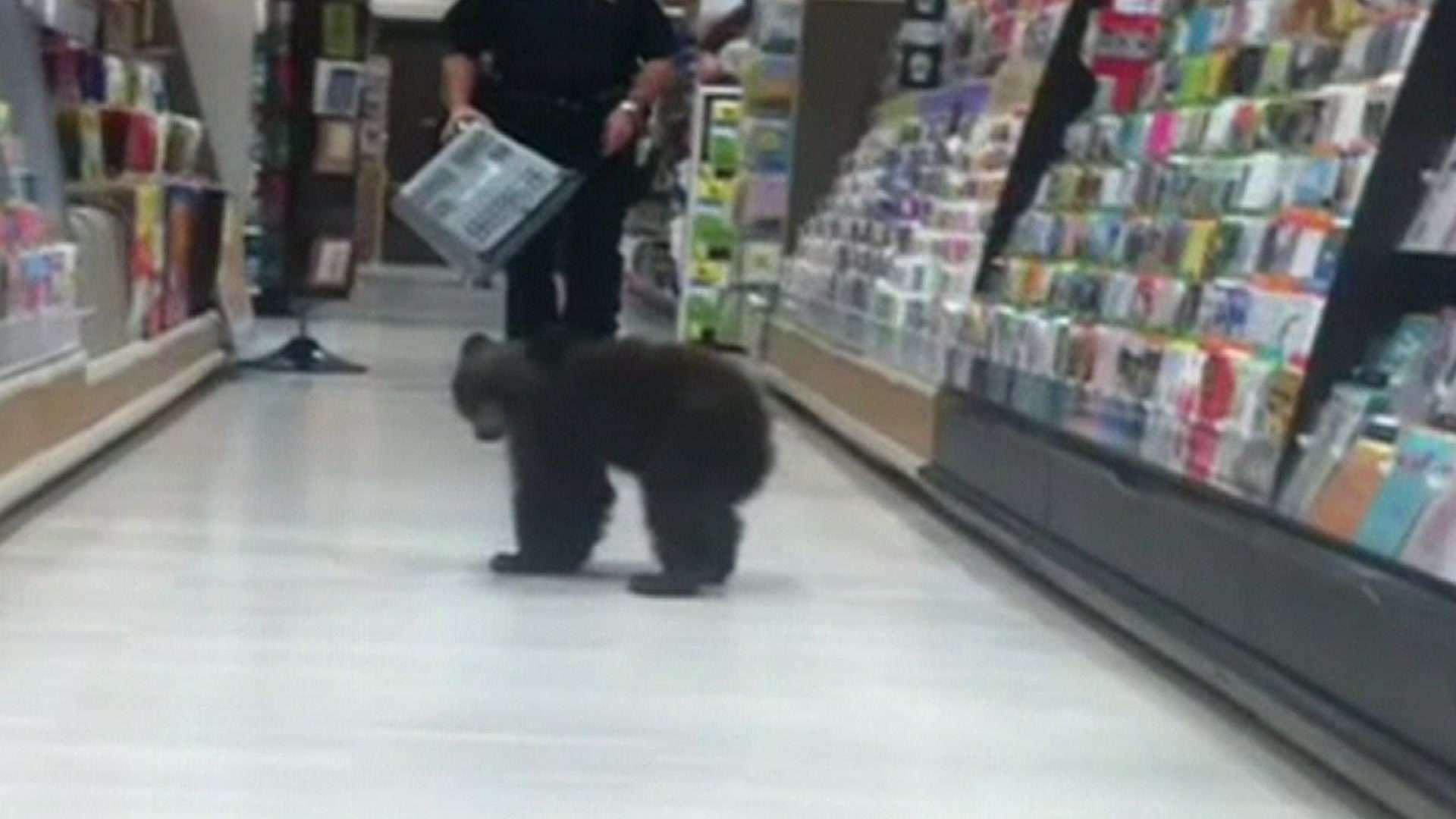 Filhote de urso invade loja nos EUA Foto: BBCBrasil.com