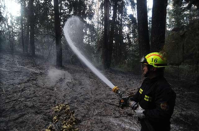 Bomberos trabajan en el incendio forestal que afecta al Lago Peñuelas en Quintay Región de Valparaiso. Foto: Agencia UNO